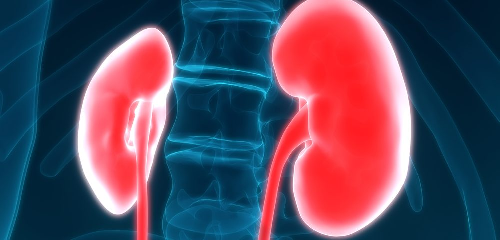 Targeting Energy-creating Pathway Could Slow Diabetic Kidney Disease Progression, Study Reports